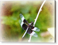 Dragonfly Respite 002 Acrylic Print by Barry Jones