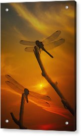 Dragonflys In The Sunset Acrylic Print by Tom York Images