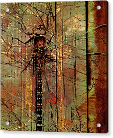 Dragons Wall  Acrylic Print by Jerry Cordeiro