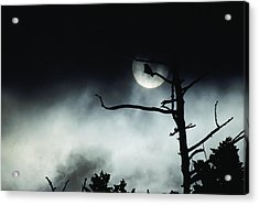 Dramatic Scene Of A Dead Tree Acrylic Print by Michael S. Quinton