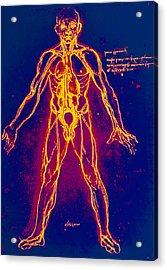 Drawing Of Human Venous System (leonardo Da Vinci) Acrylic Print by Mehau Kulyk