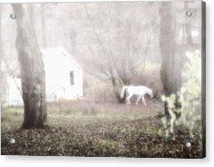 Dream Horse Acrylic Print by Marianne Campolongo