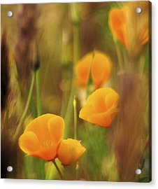 Dream Poppies Acrylic Print by Ralph Vazquez