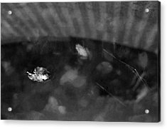 Acrylic Print featuring the photograph Dreamfrog by Luis Esteves
