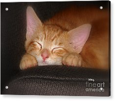Dreaming Kitten Acrylic Print by Patrick Witz