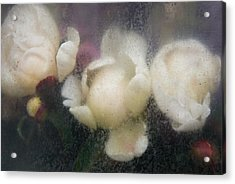 Dreaming Of Rembrandt Acrylic Print
