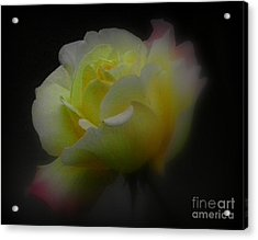 Dreams Are Made Of These Acrylic Print by Carol  Hynes