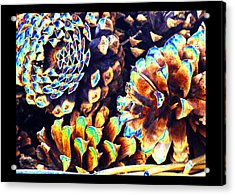 Acrylic Print featuring the photograph Dreamtime Pinecones by Susanne Still