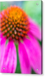 Dreamy Abstract Coneflower  Acrylic Print