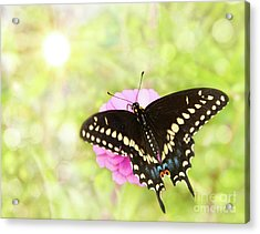 Dreamy Black Swallowtail Butterfly Acrylic Print