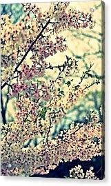 Dreamy Explosion Acrylic Print