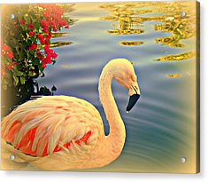 Dreamy Flamingo Acrylic Print by Kevin Moore