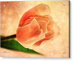 Dreamy Vintage Tulip Acrylic Print
