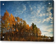 Dressed In Autumn Colors Acrylic Print by Priska Wettstein