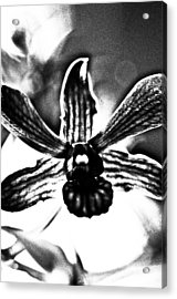Dressed In Black Acrylic Print by Kornrawiee Miu Miu