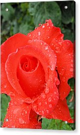 Dressed In Red Acrylic Print by