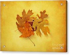 Dried Autumn Leaves Acrylic Print