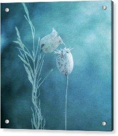 Dried Nigella Damascena As Dreamlike Characters Acrylic Print by Alexandre Fundone