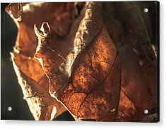 Dried Out  Acrylic Print