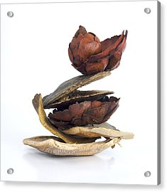 Dried Pieces Of Vegetables Acrylic Print by Bernard Jaubert