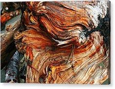 Drift Redwood Acrylic Print