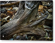 Drift Wood One Acrylic Print by Rick Bragan