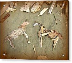 Drifting Horses Acrylic Print by Cindy Wright