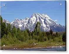 Acrylic Print featuring the photograph Driftwood And The Grand Tetons by Living Color Photography Lorraine Lynch