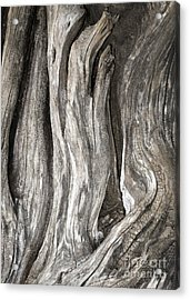 Driftwood Design 53 Acrylic Print by Larry Lawhead