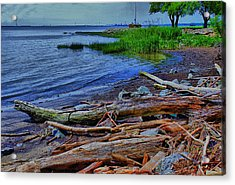 Driftwood On Shore Acrylic Print by Trudy Wilkerson