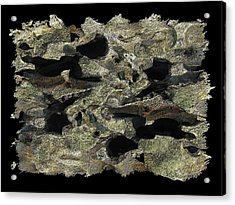 Driftwood Study Acrylic Print by Tim Allen