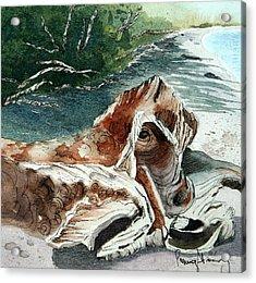 Driftwood-wisconsin Point Acrylic Print