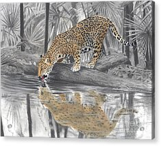 Drinking Jaguar Acrylic Print