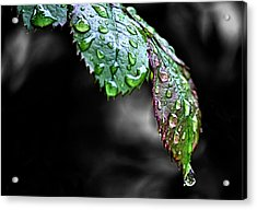 Dripping Wet Acrylic Print by Karen Scovill