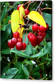Drips And Berries Acrylic Print by Ruth Bodycott