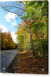 Driving Though The Birches Acrylic Print
