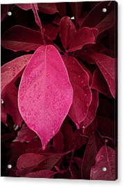 Drops On Red Acrylic Print by Nafets Nuarb