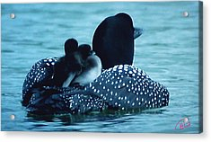 Duck Family Joy In The Lake  Acrylic Print by Colette V Hera  Guggenheim