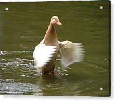 Duck Flapper Acrylic Print by Wendy McKennon