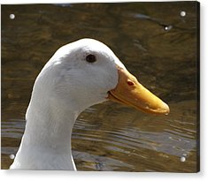 Duck Headshot Acrylic Print by Pamela Stanford