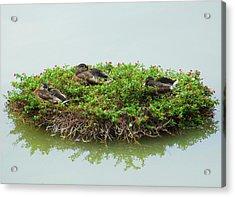 Duck Heaven Acrylic Print