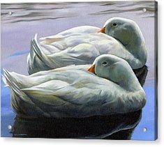 Duck Nap Acrylic Print