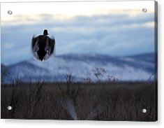 Duck Silhouette - 0001 Acrylic Print by S and S Photo