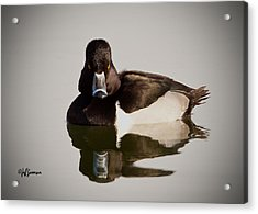 Duck With Attitude Acrylic Print by Jeff Swanson