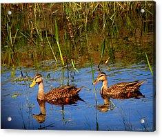 Ducks Afloat Acrylic Print