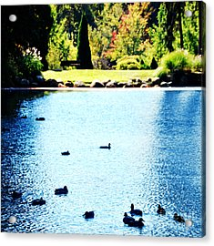 Ducks Acrylic Print by HD Connelly