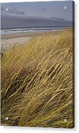 Dune Grass On The Oregon Coast Acrylic Print by Mick Anderson