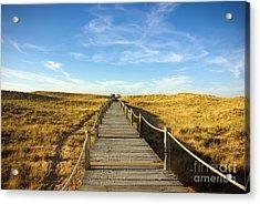 Dune Walkway Acrylic Print by Carlos Caetano