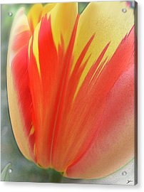 Duotone Tulip Blowing In The Wind Acrylic Print