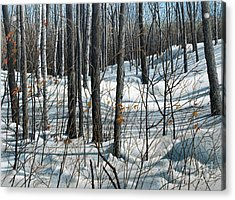 Durham Forest Acrylic Print
